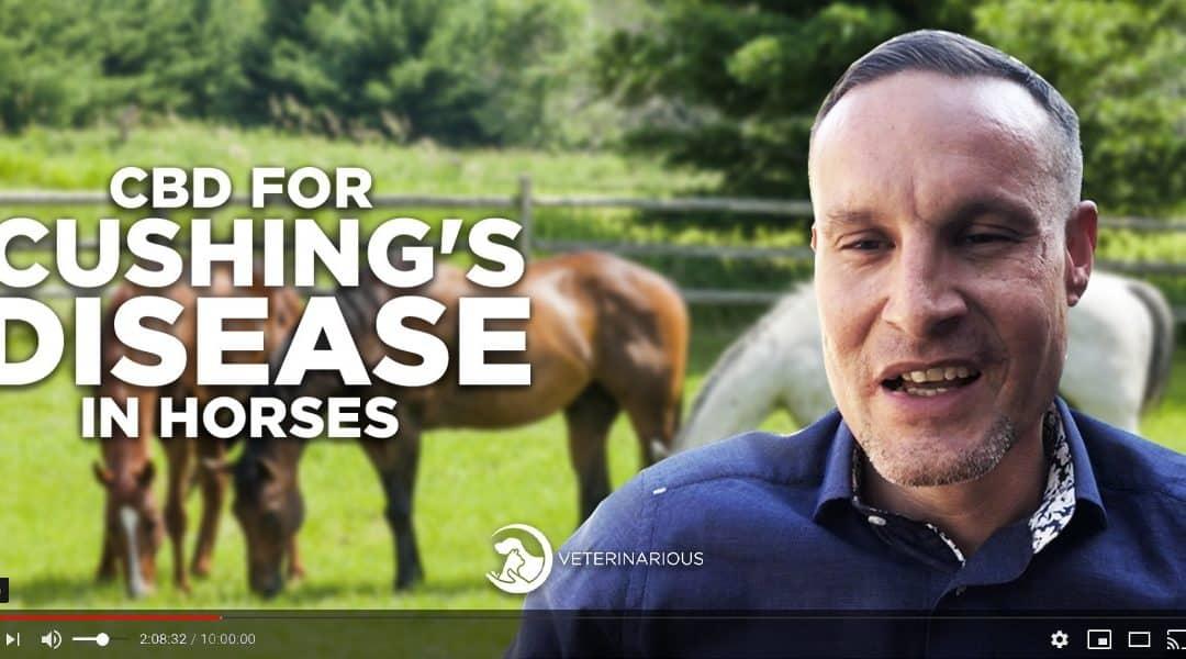 cushing's disease in horses