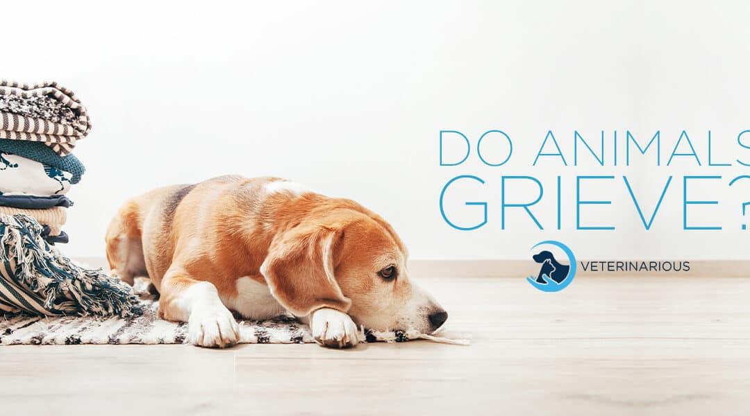 do animals grieve