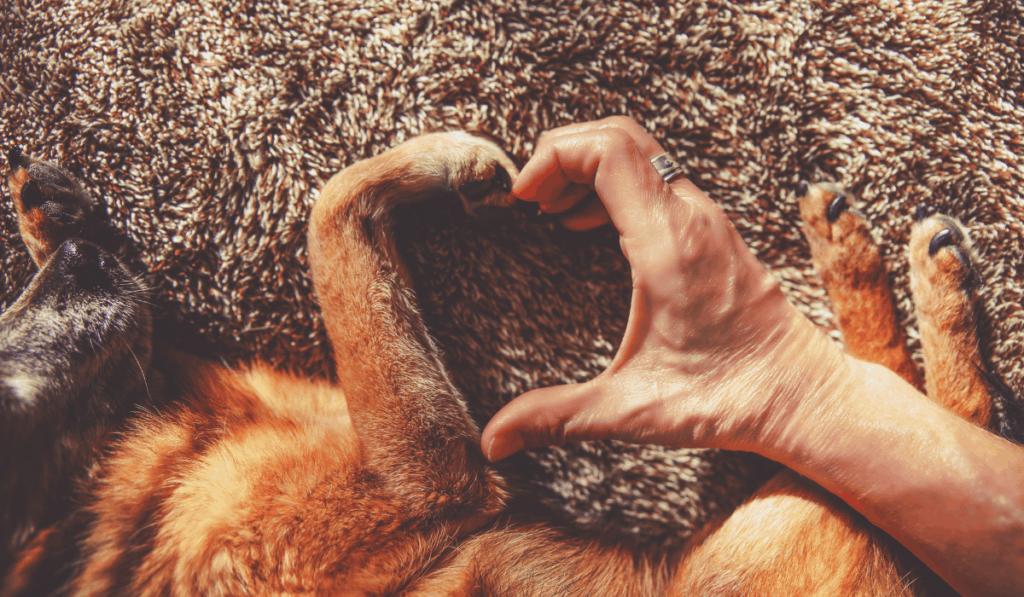 senior dogs love