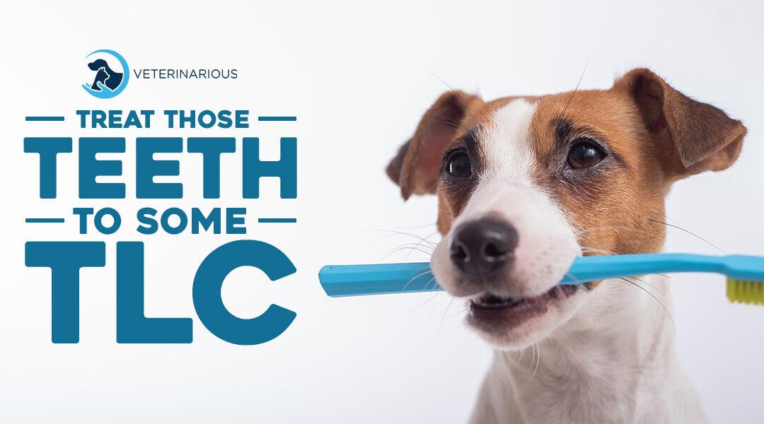 Pet Dental Health: How to Protect Those Teeth
