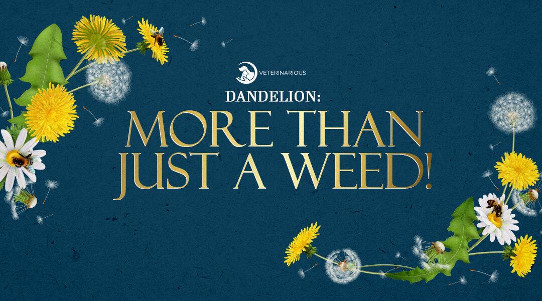 dandelion for dogs